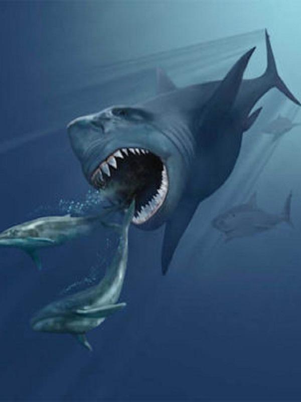 ¿Cómo evolucionaron los tiburones gigantes?