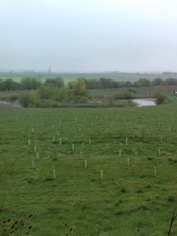 La Agencia Vasca del Agua planta 4.220 nuevos árboles y arbustos en el humedal de Pedroko en Salvatierra (Álava)