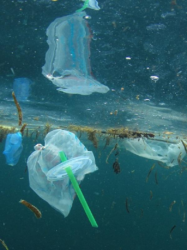 En 2050 habrá más toneladas de plástico que de peces en los océanos, según la marca de productos ecológicos Frosch