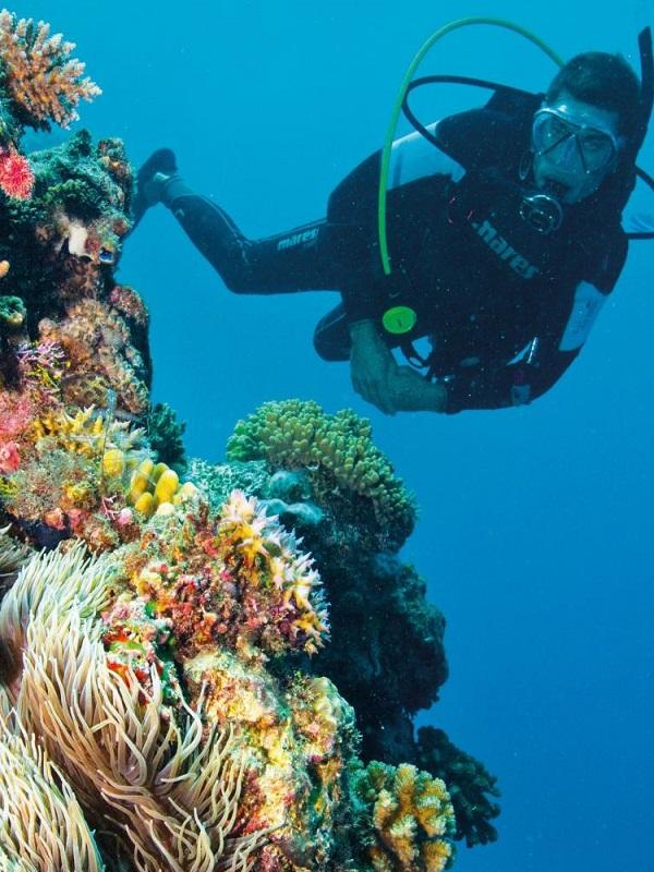 El turismo asociado a los arrecifes reporta 6.900 millones de beneficios en el Caribe