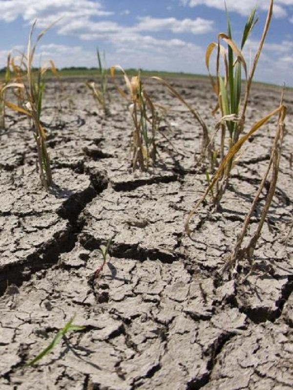 El cambio climático ya está mermando la producción de alimentos