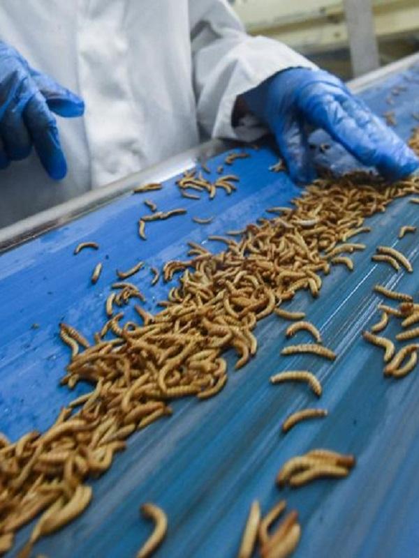 Las plantas, y los insectos en nuestra dieta salvarán el Planeta