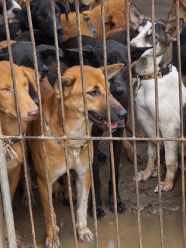 Se oponen a devolver 192 perros a un criadero denunciado por maltrato animal en Paracuellos de Jarama