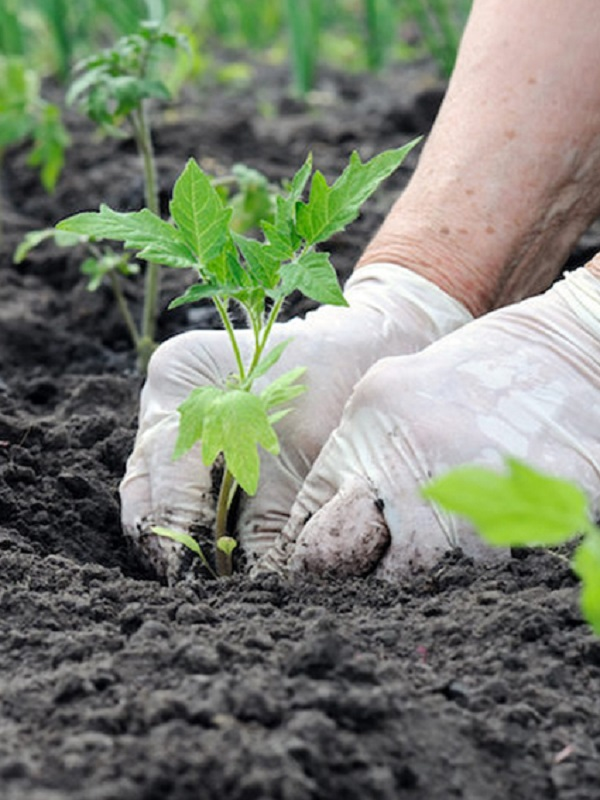 Para evitar la sexta extinción la agricultura ecológica es una gran aliada