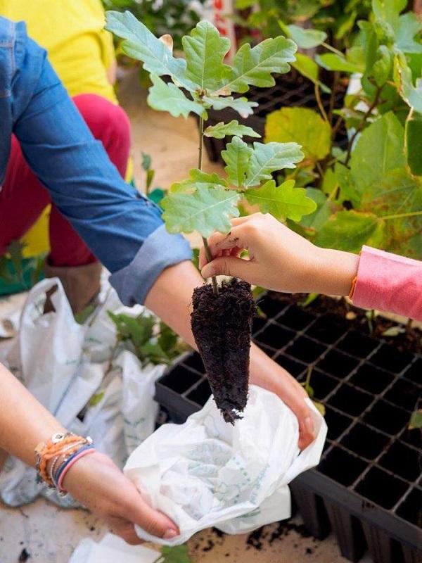 Madrid celebra El Día Mundial del Medio Ambiente con árboles para plantar, mercadillo agroecológico, feria de ecoturismo y escolares en bicicleta
