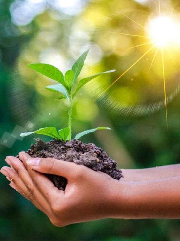 6 tecnologías que ayudan a que las empresas sean más ecológicas