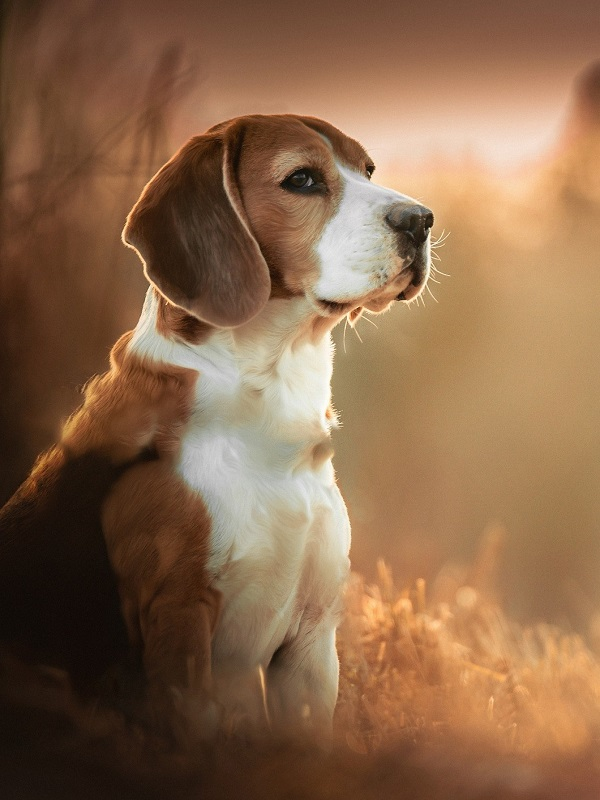 Denuncian la muerte de un perro por parte de un adiestrador canino