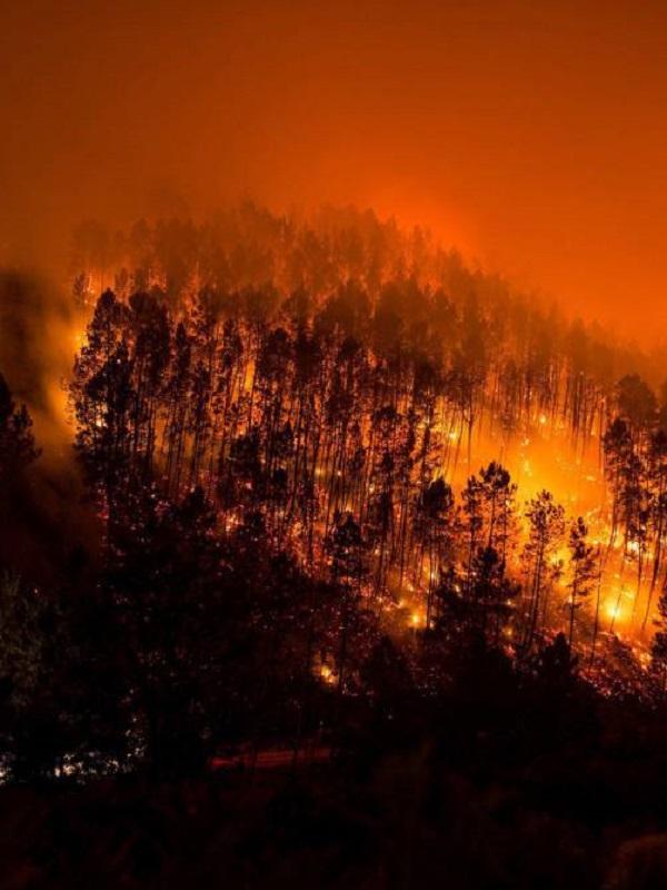 Avances frente a los grandes incendios forestales