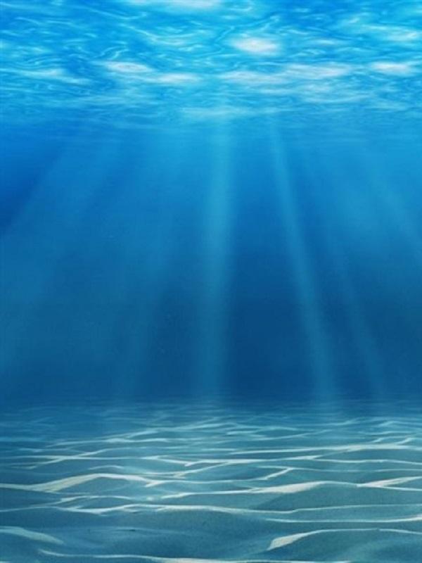 Las ONG ambientales reclaman un Tratado global y establecer medidas para proteger los océanos
