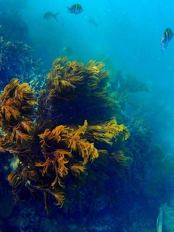 Más de 700 organizaciones y miles de personas, implicadas en la conservación del océano en 'Life Ip Intemares'