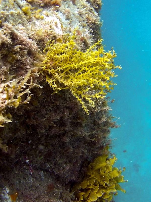 Celebran la inclusión de nuevas especies marinas en el Catálogo de Especies Amenazadas presentes en el puerto de Agaete