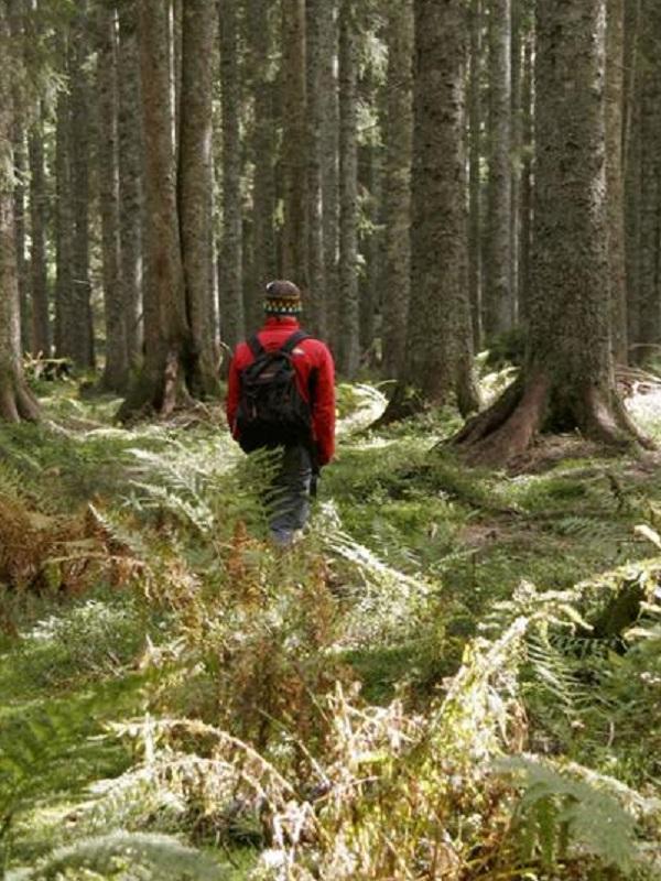 La gestión forestal como impulsora del desarrollo rural
