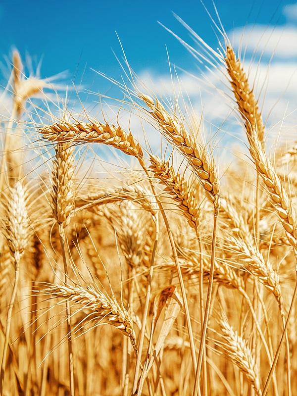 La FAO considera que la alimentación saludable debe ir de la mano del cuidado del planeta
