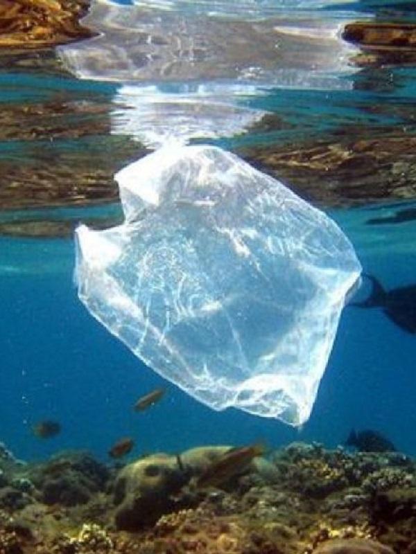 La ONU pide un esfuerzo para eliminar los plásticos que terminan en los océanos y buscar la igualdad de género en el mar