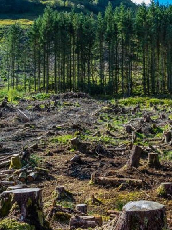 Las importaciones españolas de soja para el ganado deforestan implacablemente el Planeta