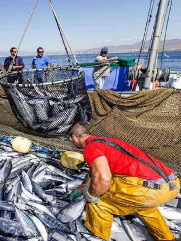 Oceana pide proteger áreas esenciales para los peces para superar la crisis de sobrepesca del Mediterráneo