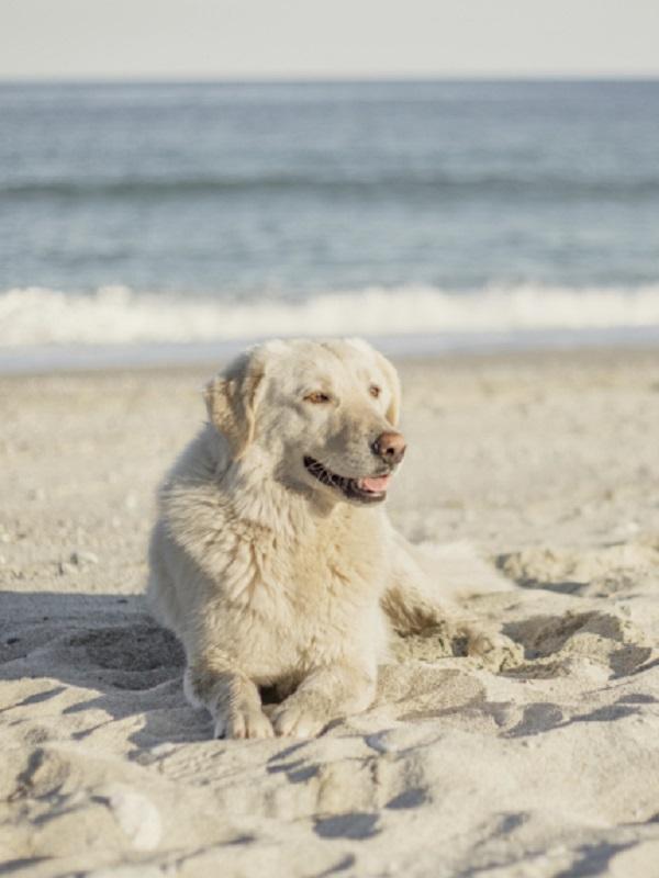 El Ayuntamiento de Almería limita la presencia de mascotas en las playas