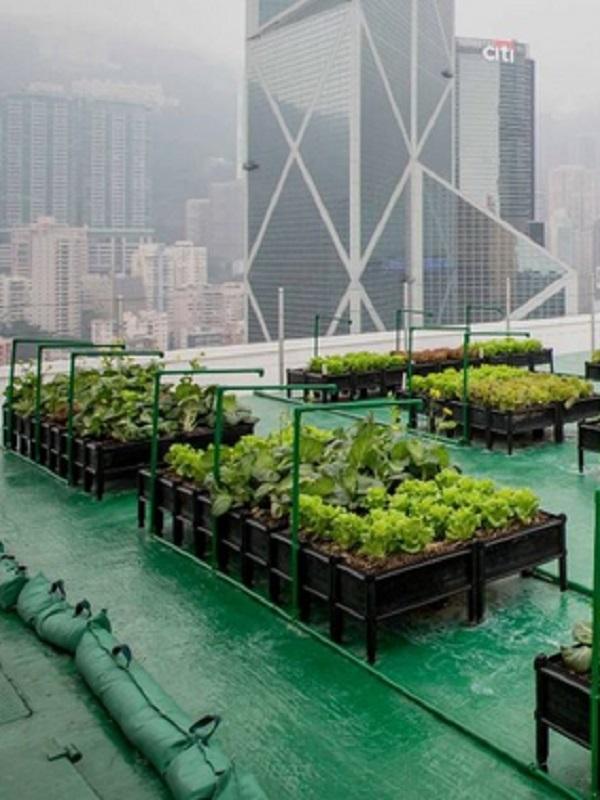 Un proyecto europeo ofrece ayuda para instalar invernaderos en las cubiertas de los edificios