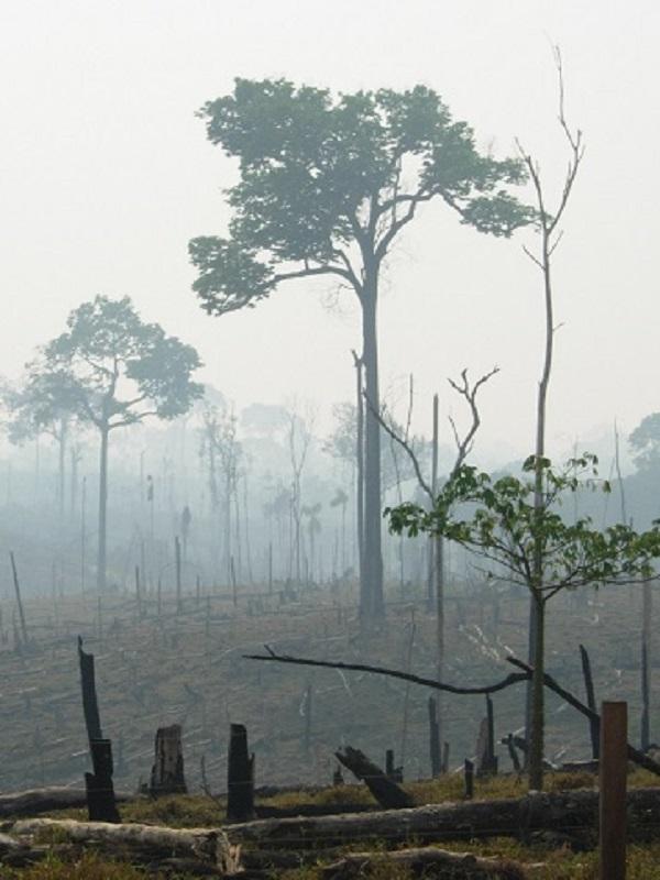 Talar bosques no es la solución contra los incendios forestales en Barbate