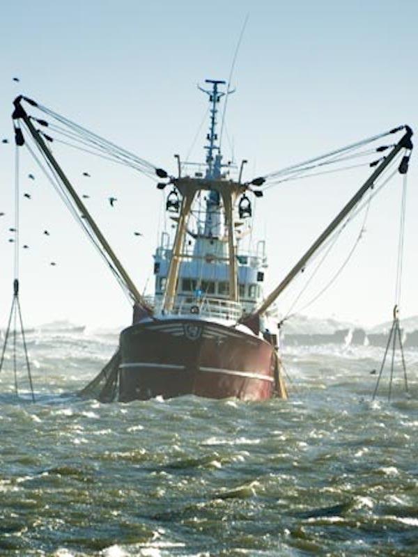 Europa pone fin a la pesca eléctrica a partir de 2021