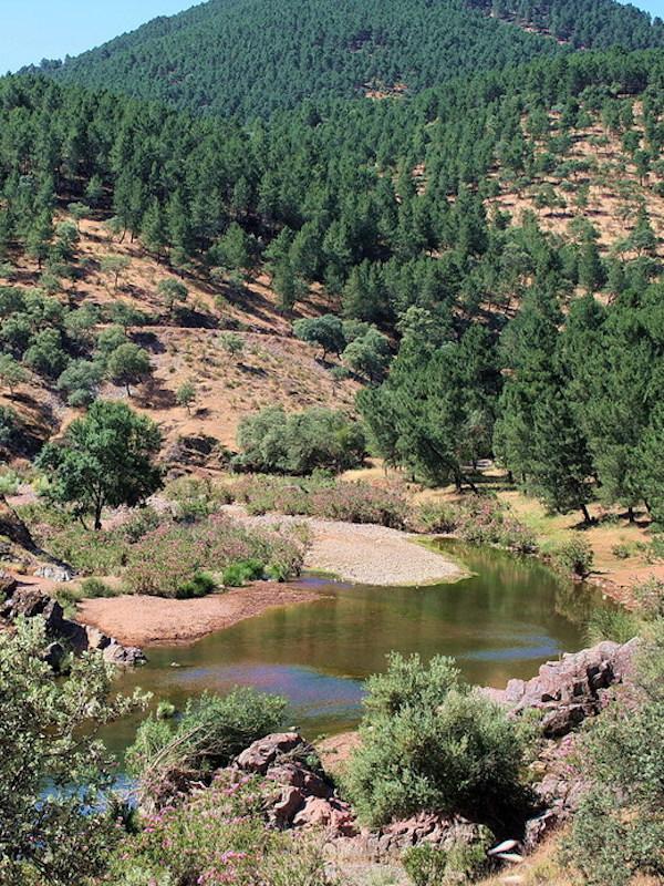 La Sociedad de Historia Natural detecta 210 especies de plantas y animales en el parque de 'El Patriarca', en Córdoba