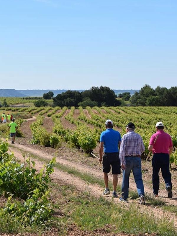 El Concurso de Pinchos 'Ruta del Vino Cigales' (Valladolid) se amplía a 3 fines de semana e incorpora un ruta senderista