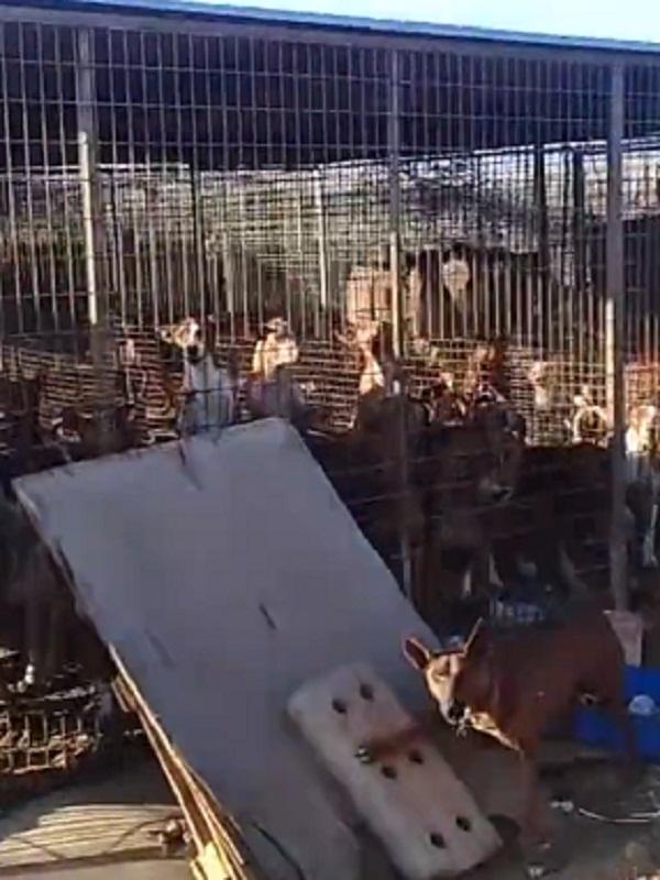 Canarias, zulos donde los cazadores hacinan perros en suelo público