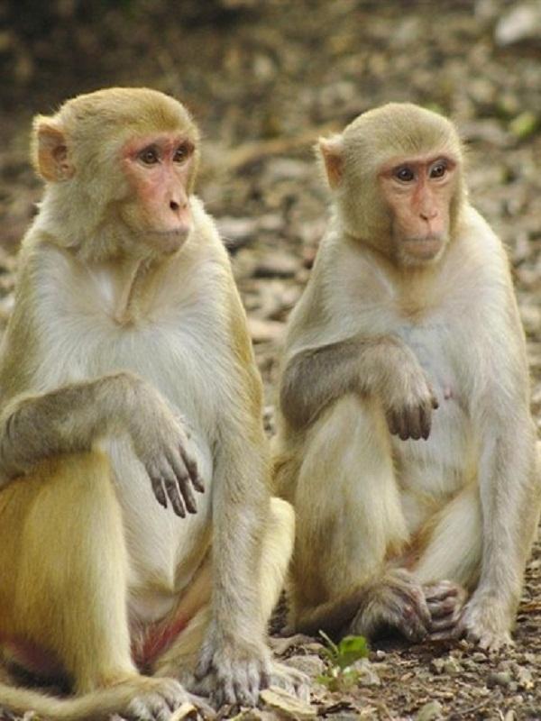 El 60 por ciento de las especies de primates están ahora en peligro de extinción