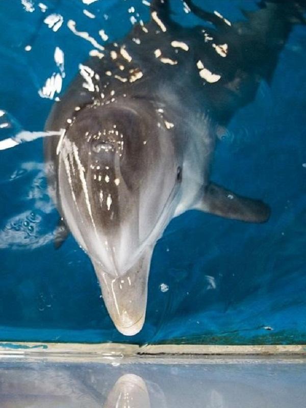 El Guantánamo de los delfines del Zoo Aquarium de Madrid