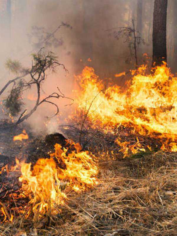 El Síndic del País Valencià pide a las administraciones información sobre los planes locales de prevención de incendios forestal
