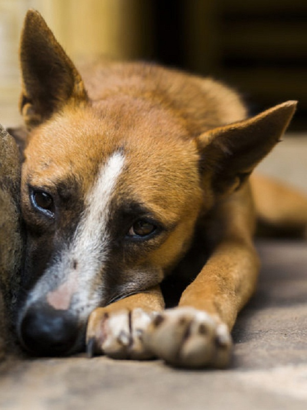 La laxitud en las articulaciones está relacionada con la angustia, también en animales