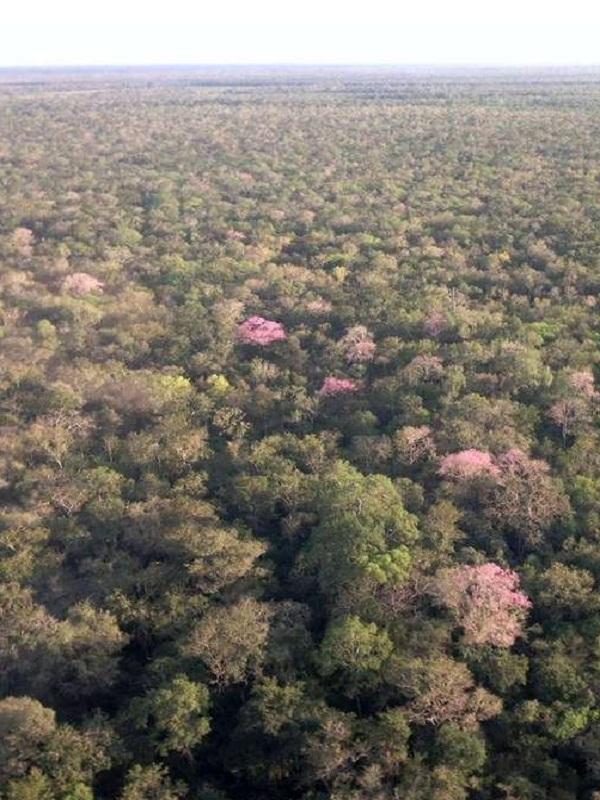 Exposición 'Los Bosques de Correos y WWF: recuperar los paisajes perdidos'