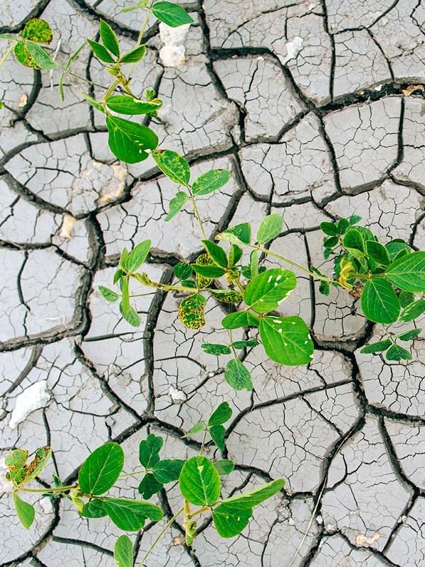 Expertos piden que los microbios no se queden fuera del debate sobre el cambio climático