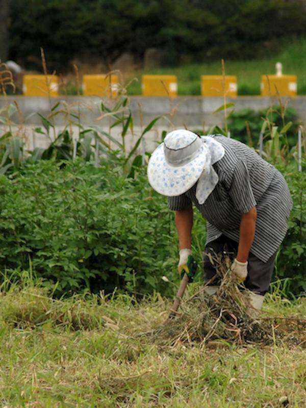 Jornada sobre el papel de la agricultura en la economía circular de SIGFITO