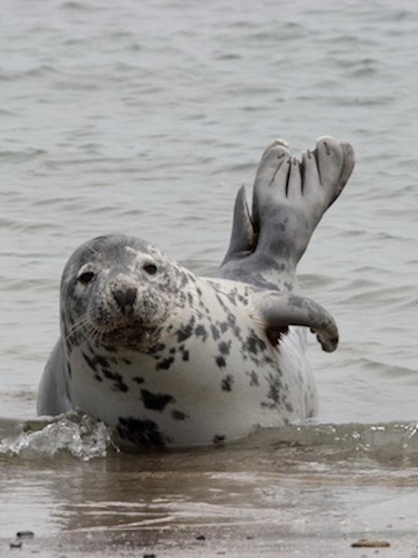 El secreto mejor guardado de las focas