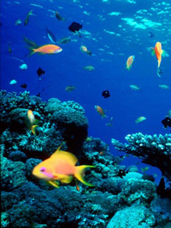 Tratado Global de los Océanos en 2020