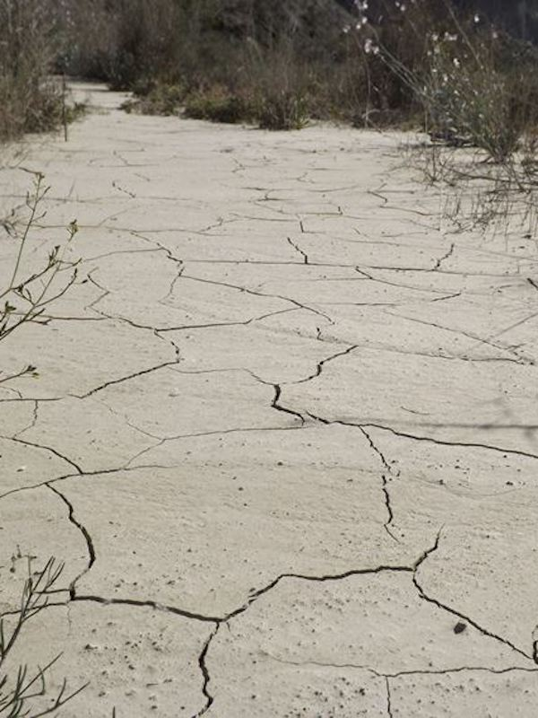 Acción contra el cambio climático está en lo local y lo regional
