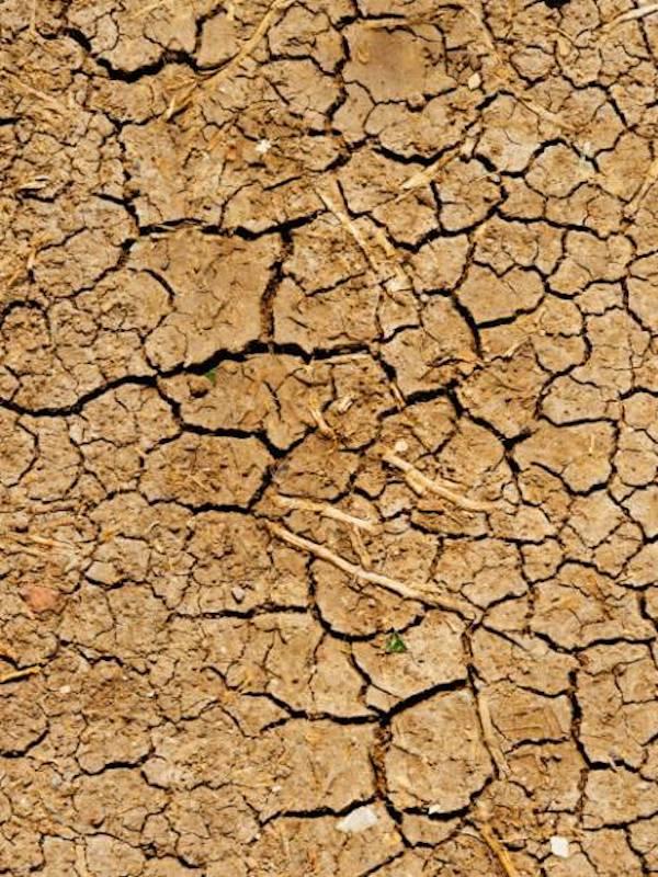 Sanitarios analizan este miércoles cómo afecta el cambio climático a la salud de los castellano-manchegos