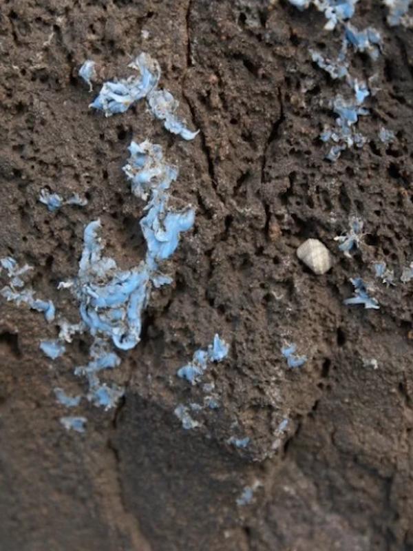 Insólito plástico incrustado en roca aparece en la costa de Madeira