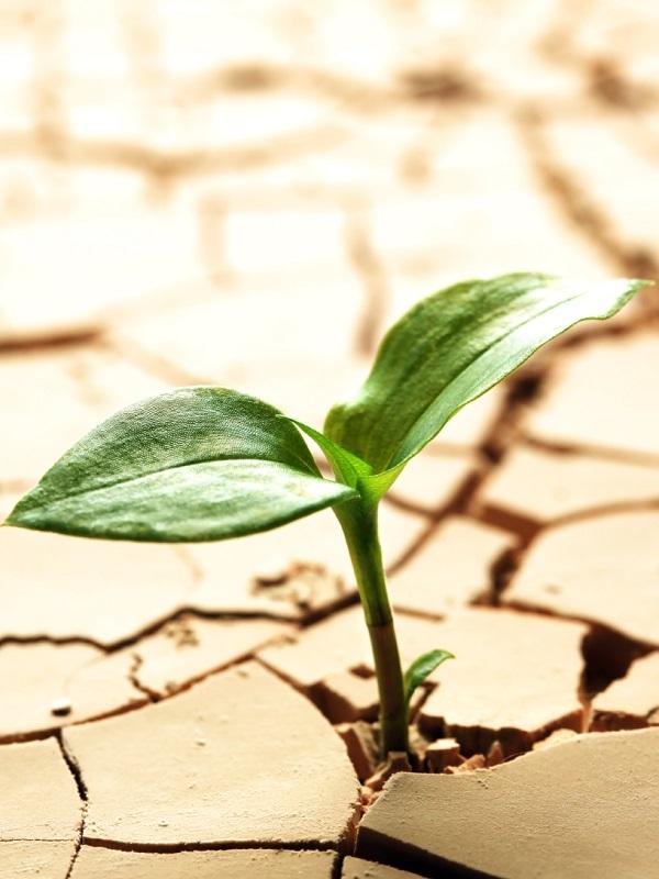 Aena contra el cambio climático