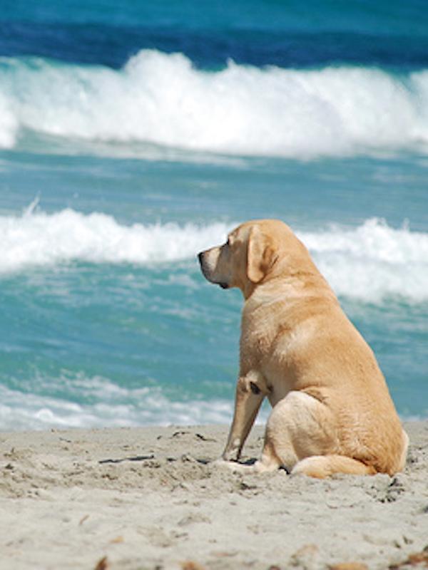 El colegio de veterinarios de Asturias difunde sus recomendaciones para posibilitar el acceso de perros a las playas