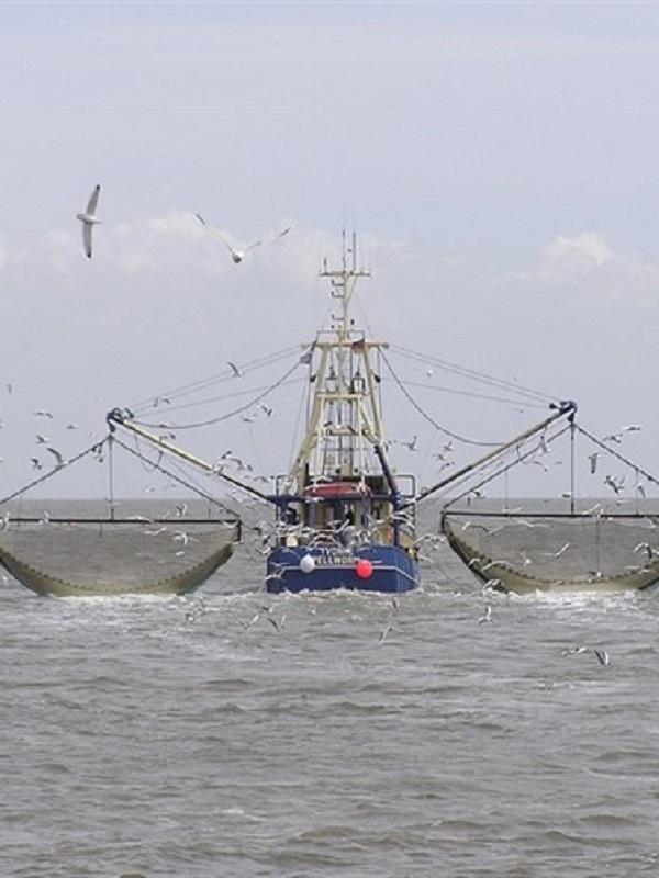 El Cambio Climático merma las capturas pesqueras
