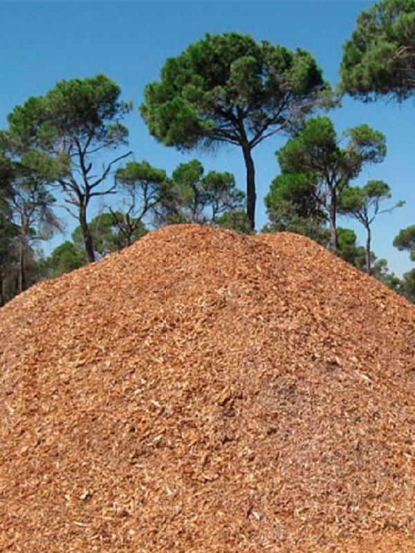 Málaga inaugura un sistema de calefacción en edificios municipales que usa la biomasa forestal como combustible