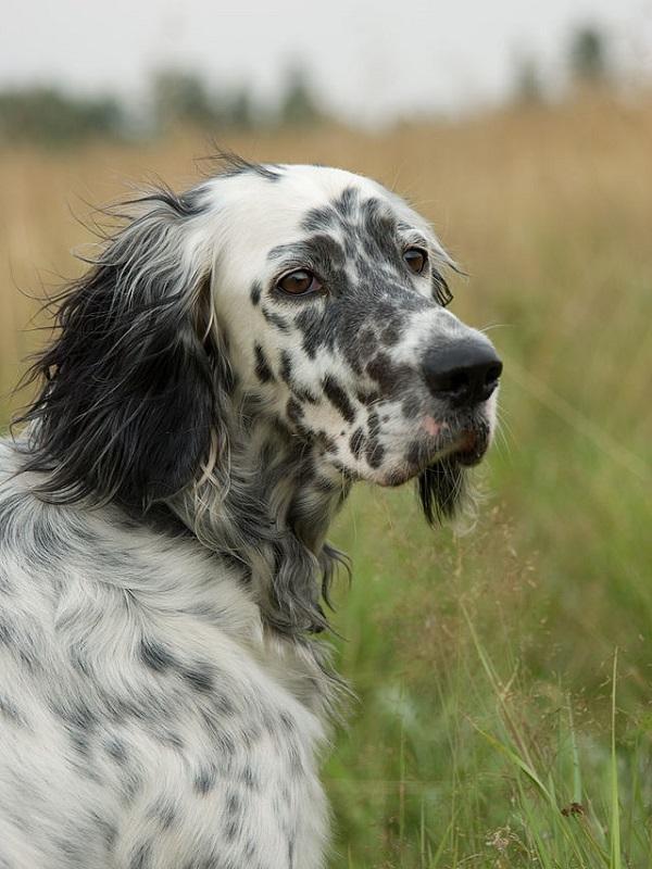 La Real Federación Española de Caza se compromete a dar una vida digna a los animales de compañía