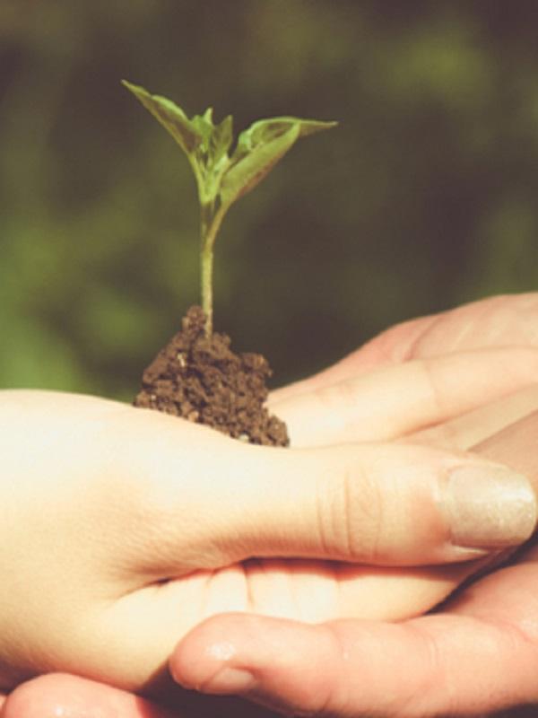 Reflexiones en materia ambiental al final de esta legislatura