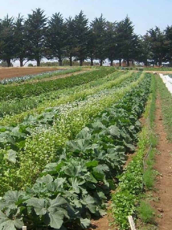 Propuestas agroecológicas para la nueva Política Agraria Comunitaria