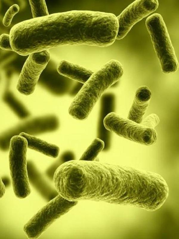 Capturan bacterias que comen y respiran electricidad