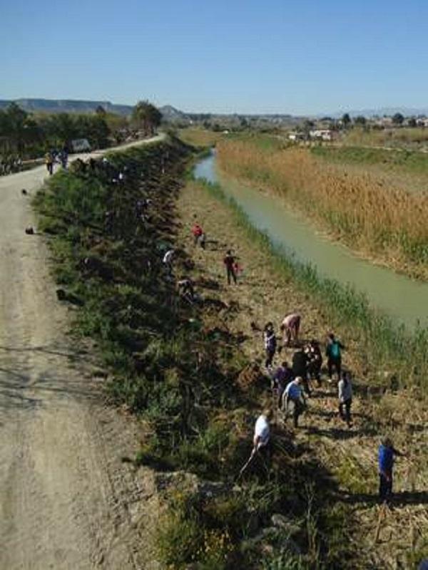 Voluntarios establecen un nuevo bosque de ribera en Lorquí