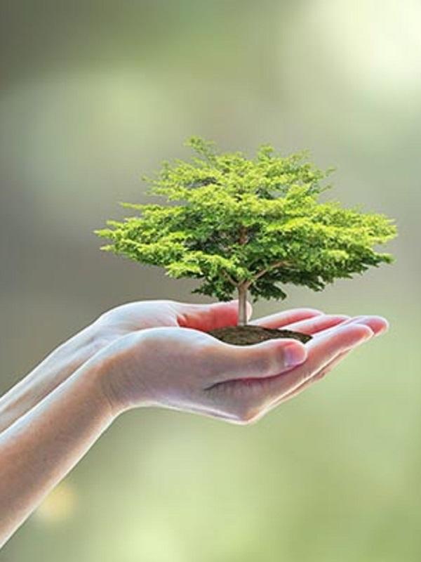 Andalucía planifica más de 360 inspecciones ambientales para 2019