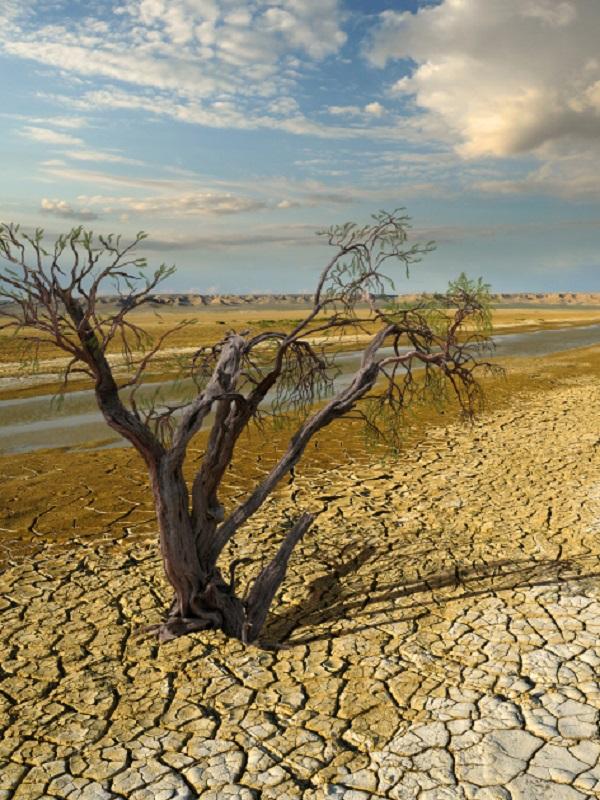 El anteproyecto de Ley Foral de Cambio Climático de Navarra en exposición pública